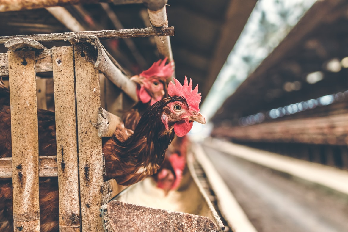 Time For Changes To Industrial Factory Farming Model?