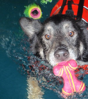 How Tycho Became A Swimming Dog